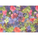 Fotokarton A4 - květy hortenzie